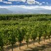 Le colline valtidonesi viste dalla Tenuta Pernice